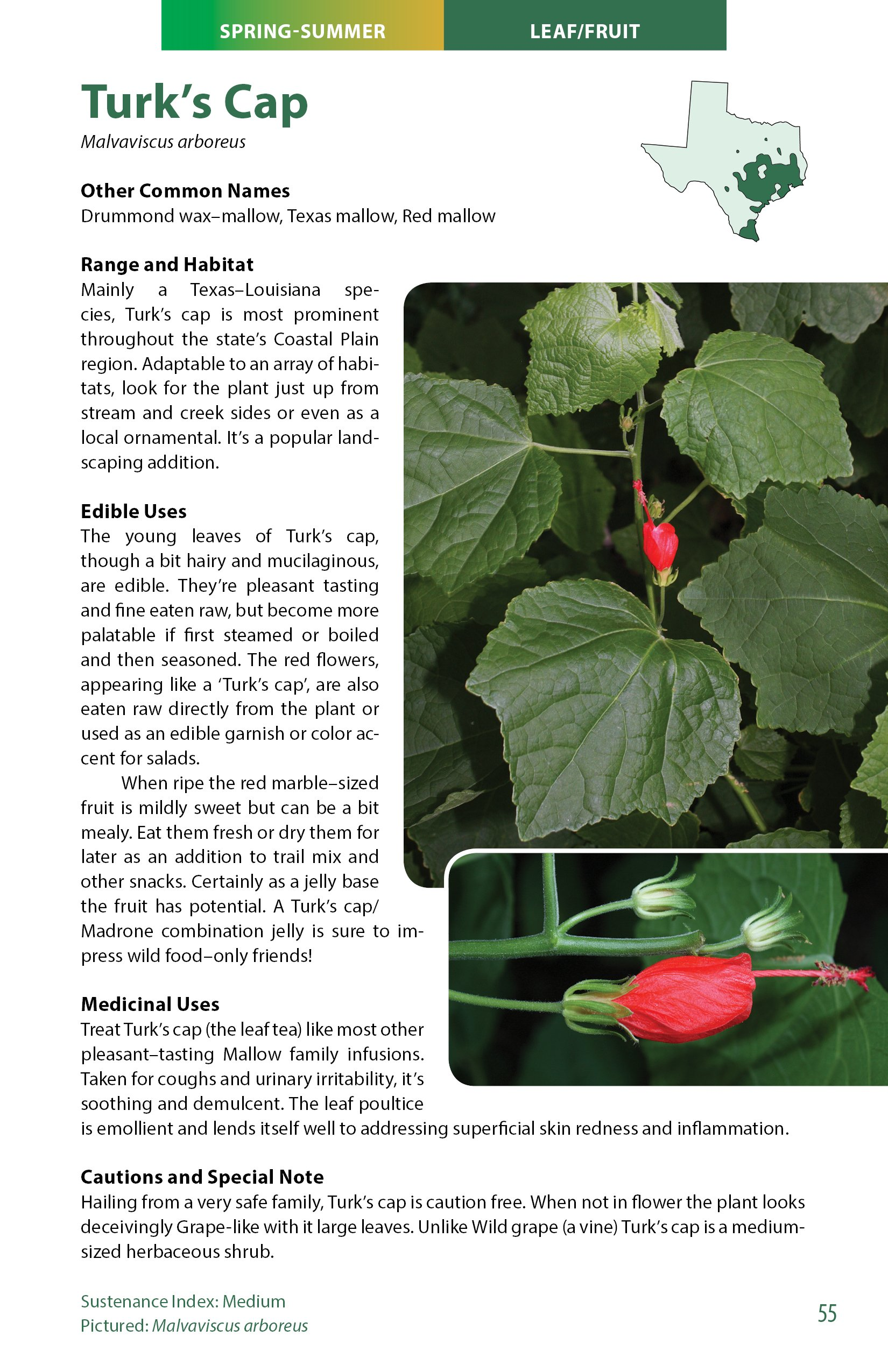 Wild Edible Plants Of Texas A Pocket Guide To The Identification Collection Preparation And Use Of 60 Wild Plants Of The Lone Star State Charles W Kane 9780977133390 Amazon Com Books