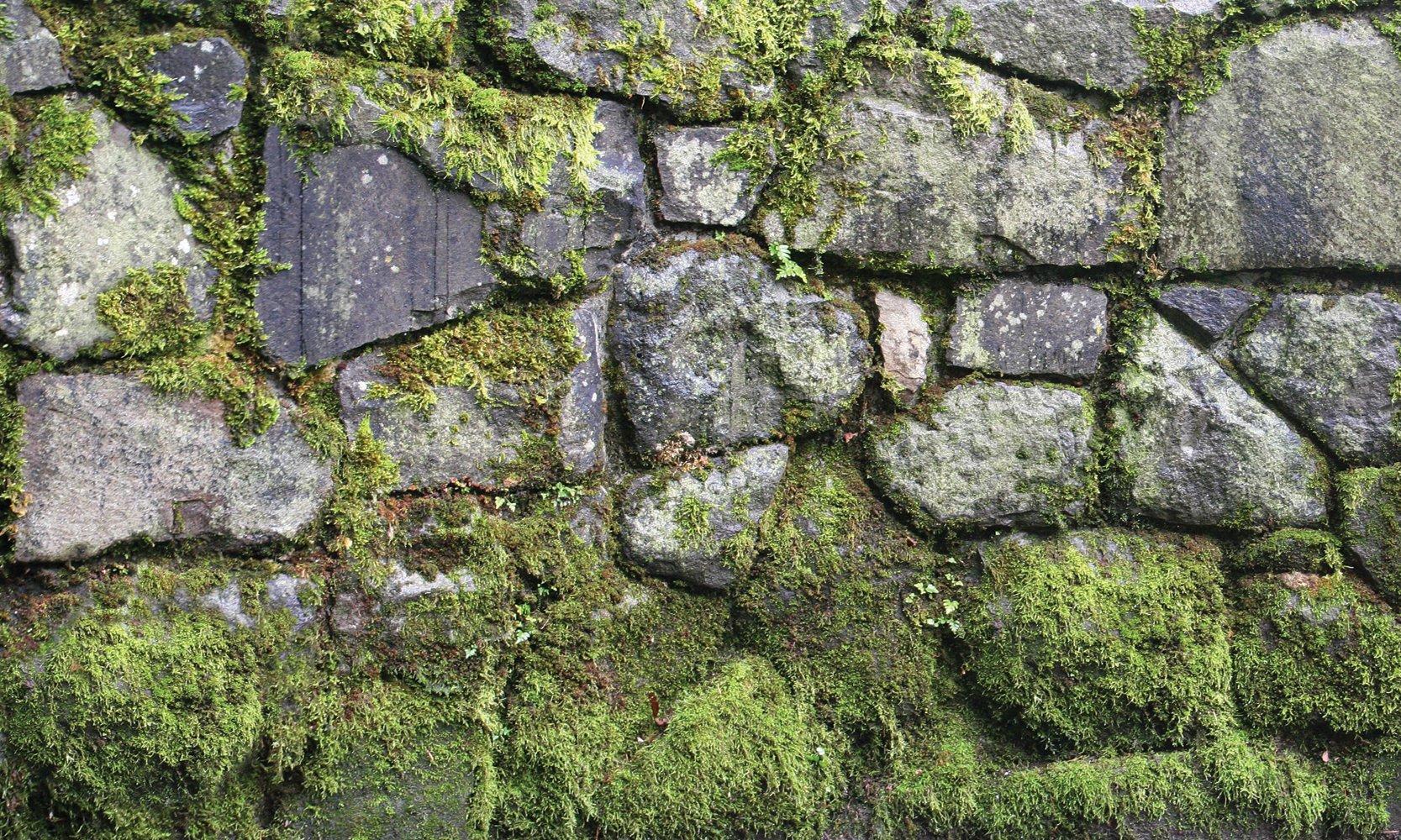 Biggies- Window Well Scenes Wall Art- Moss, 60'' x 120''