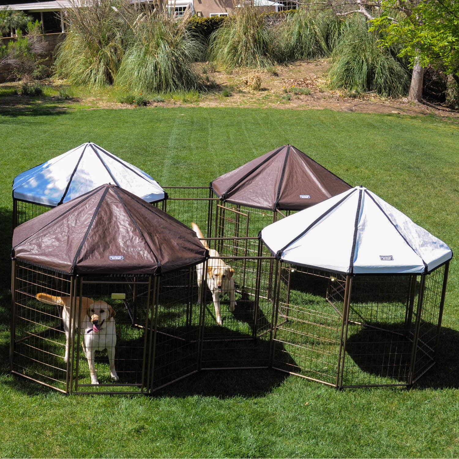 advantek pet gazebo reviews image 3