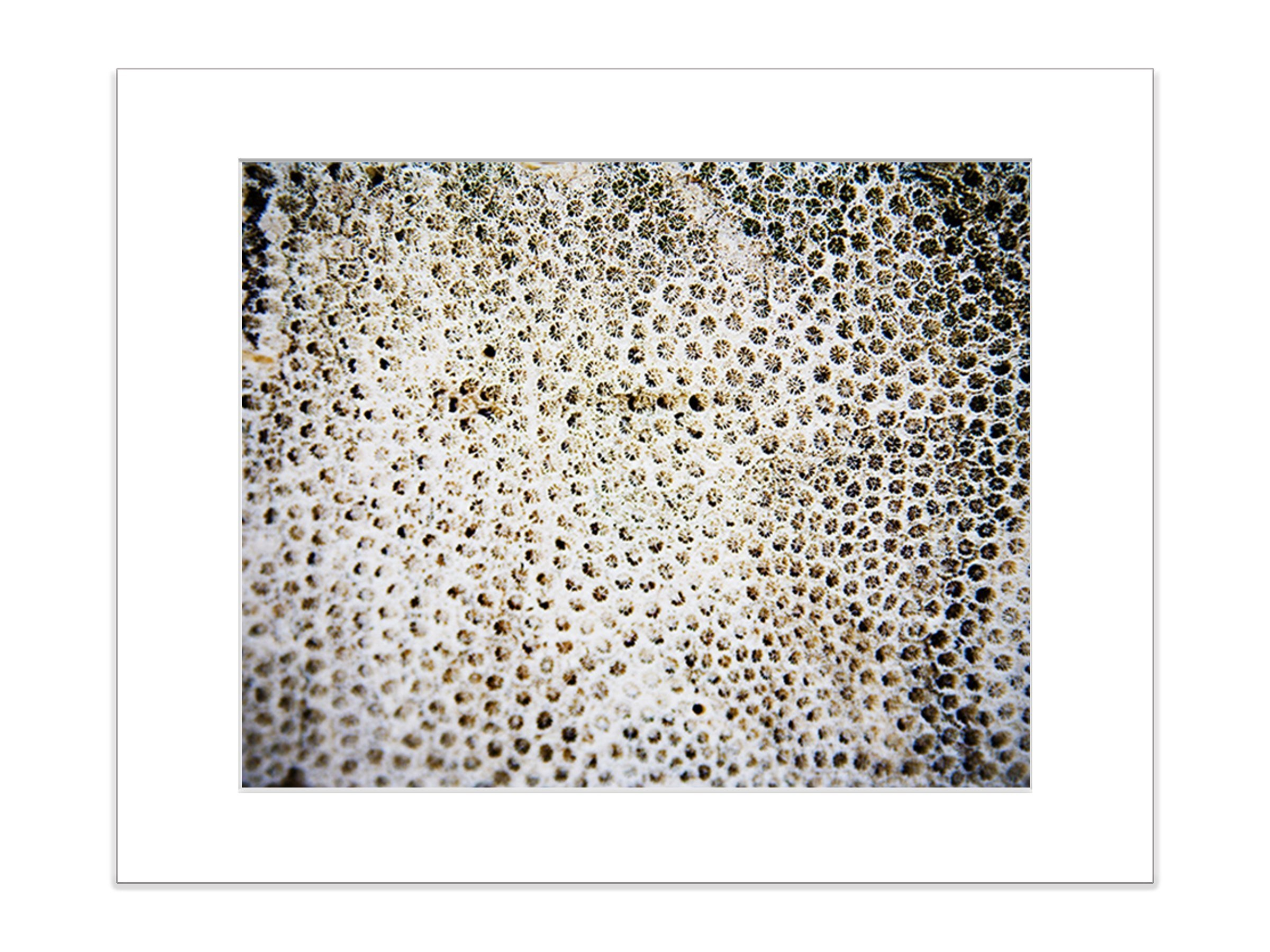Abstract Coral Reef Marine Life Underwater Beach 8x10 Matted Photograph
