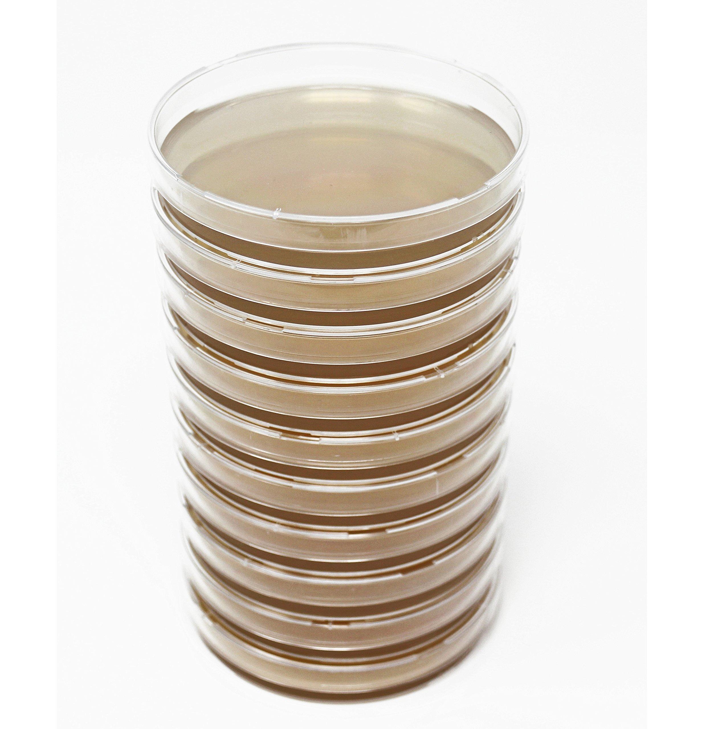 EZ BioResearch Malt Extract Agar (MEA) Plates for Mushroom Cultivation (10 Prepoured Agar Plates)