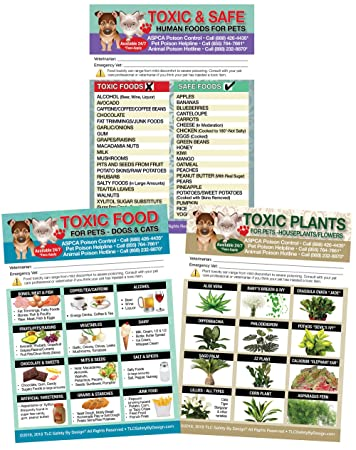 Amazon Set Of 3 Enhanced Trademarked Toxic Safe Foods Toxic