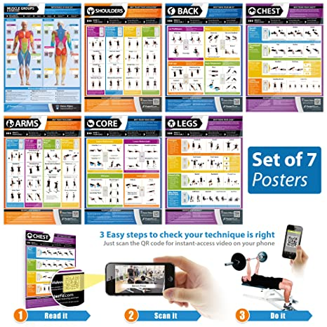 Gym and Muscle Building Exercise Workout Posters (Set of 7)| Laminated Gym  and Home Poster Size 33