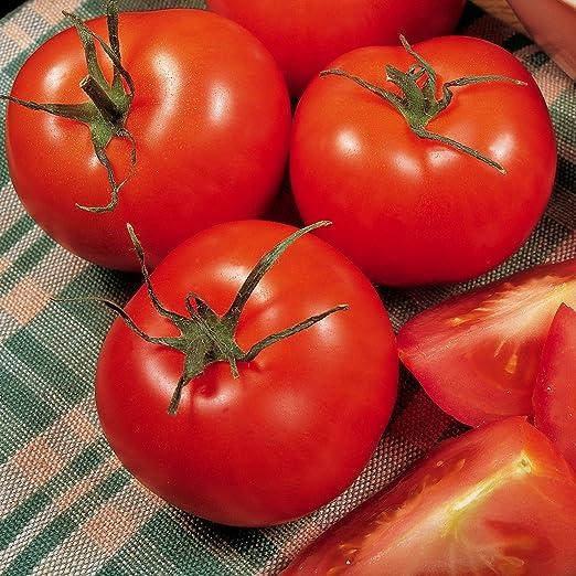 Tomate Plantas