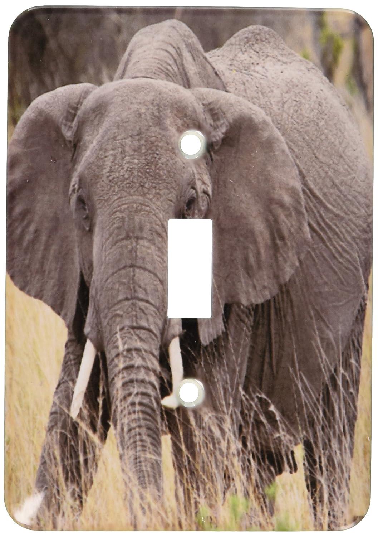 3dRose Lsp_9895_1 African Elephant, Loxodonta Africana, Masai Mara National Park Kenya Africa Single Toggle Switch