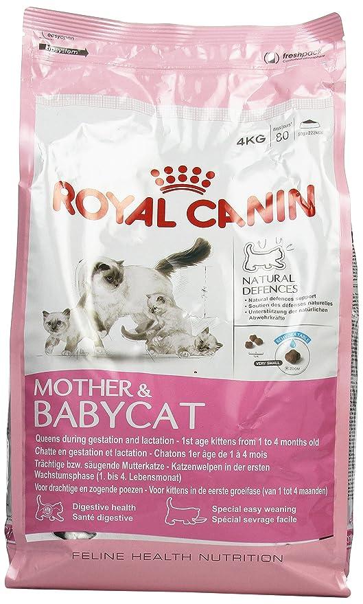 Royal Canin C-58424 Baby Gato - 4 Kg: Amazon.es: Productos para ...