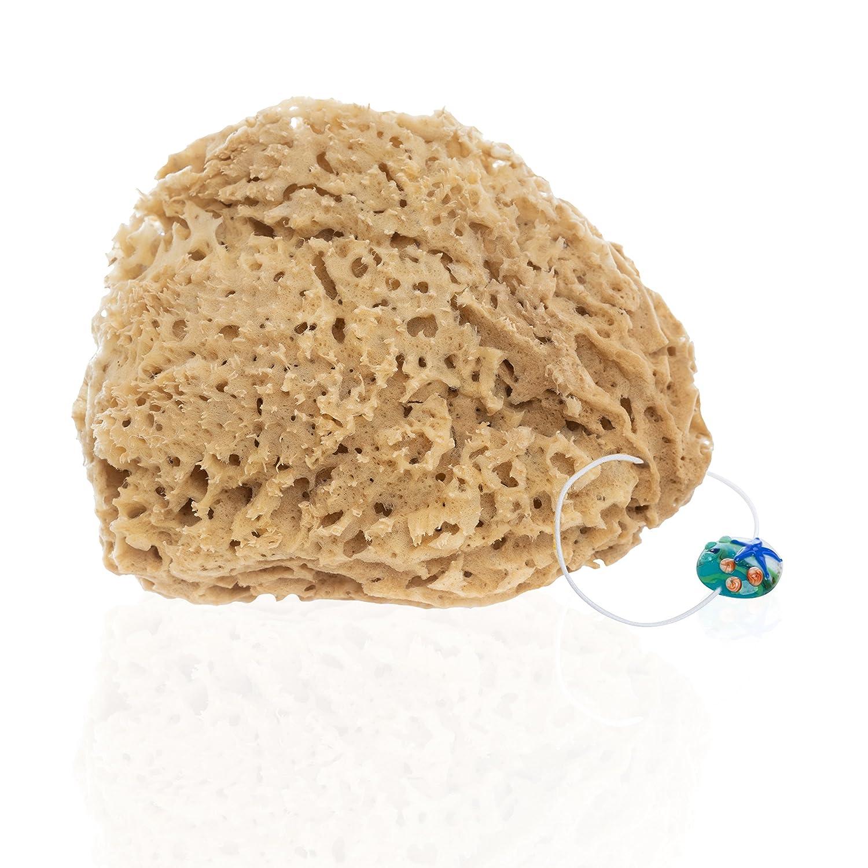tom& pat® Esponja Natural | Esponja con cordel para colgar | poros grandes + sin blanquear | Esponja de baño de primera calidad | Esponja de ducha de origen griego | ø 18cm
