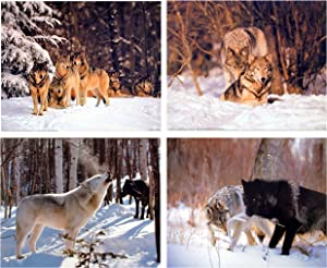 Pair Of Wolf Wall Decor Art Print Snow Wildlife Animal Nature 16x20 Four Set Posters