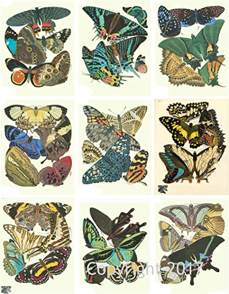 Vintage Butterfly Collage Sheet Art Images for Decoupage Scrapbooking Jewelry Making