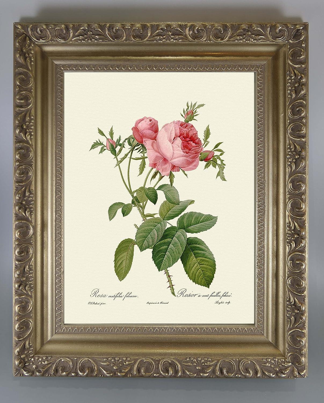 BiblioArt Series P.J.ルドゥーテ 「ロサケンティフォリアフォリアセア」 金縁額装品 B073RC4SJW