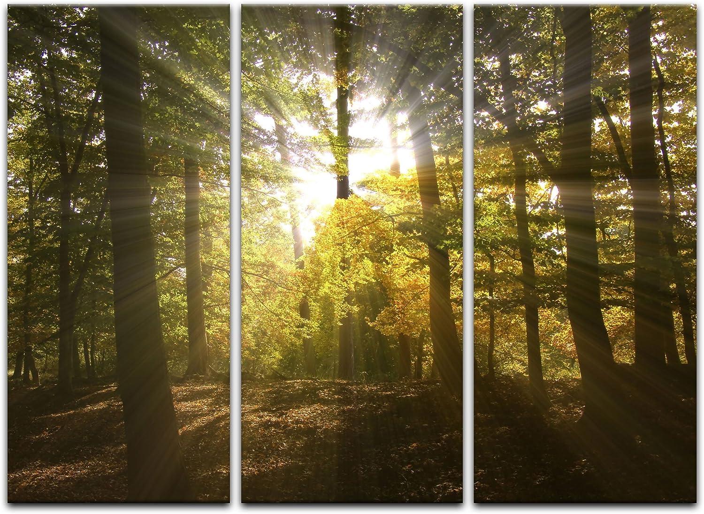 Bilderdepot24 Cuadros en Lienzo la tala de bosques - 40 x 30 cm - Listo tensa, Directamente Desde el Fabricante: Amazon.es: Hogar