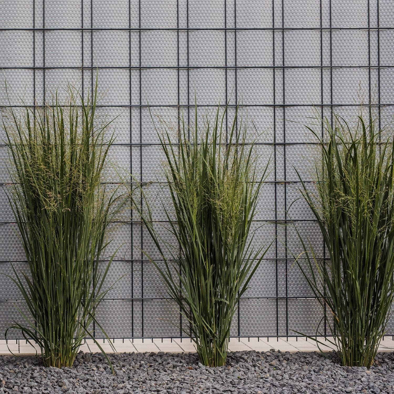 workingHOUSE Recinzione Giardino Frangivista 12x Marrone Chiaro Polyrattan Pannelli per Recinzioni 255 cm x 19 cm Protezione per Gli Sguardi Indiscreti
