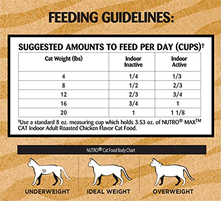 How Much To Feed A Cat A Day Petfinder