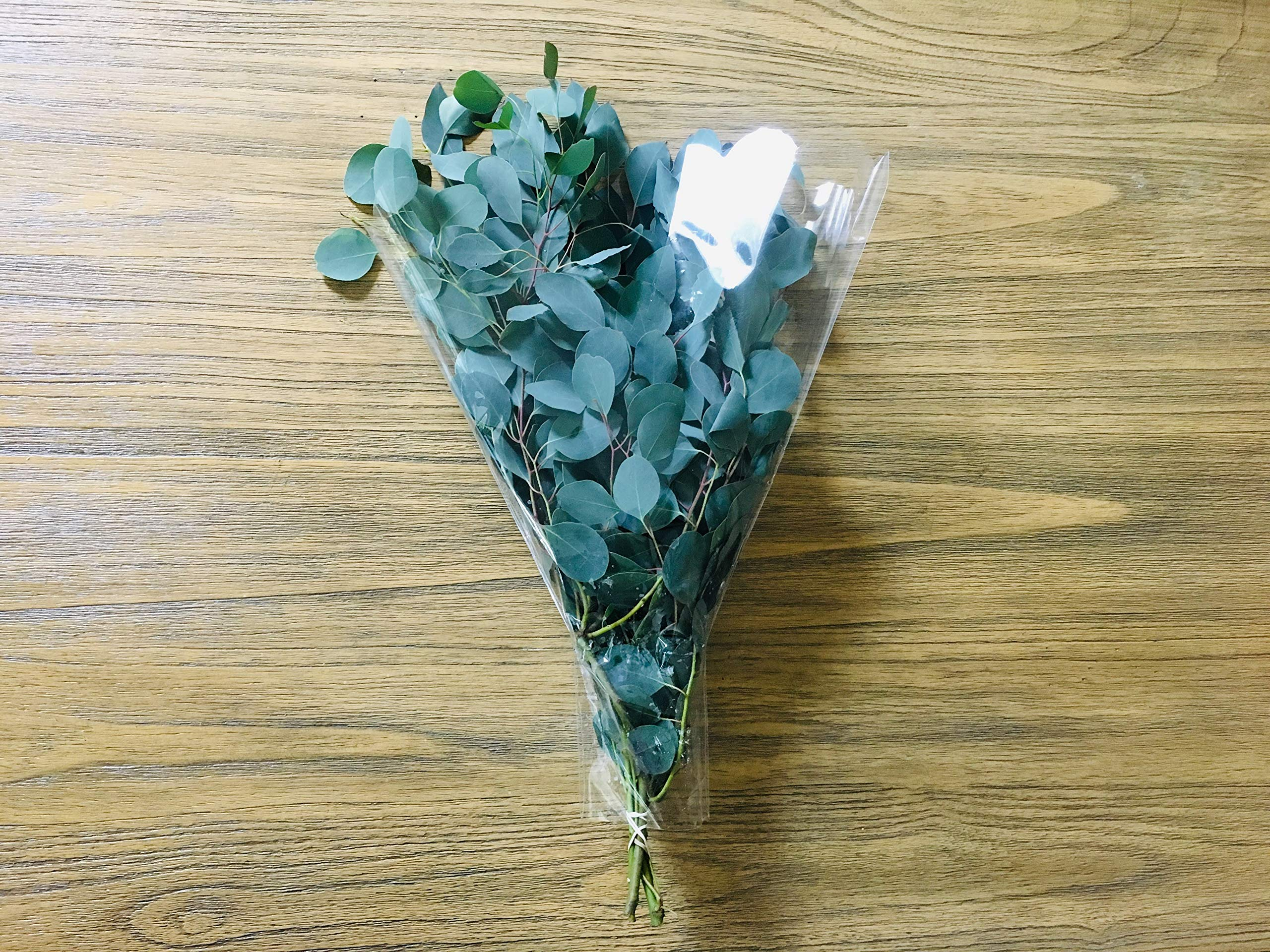 Fresh Eucalyptus Wedding Flower, Silver Dollar Eucalyptus Bunch, Herbal Bouquet, Event, Wedding - Wholesale 1/2lbs to 5lbs (5lbs = 10 Bunches)