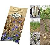 Saatgut Set: 'Spargel Vielfalt', 3 Gourmet-Sorten als Samen in schöner Geschenk-Verpackung