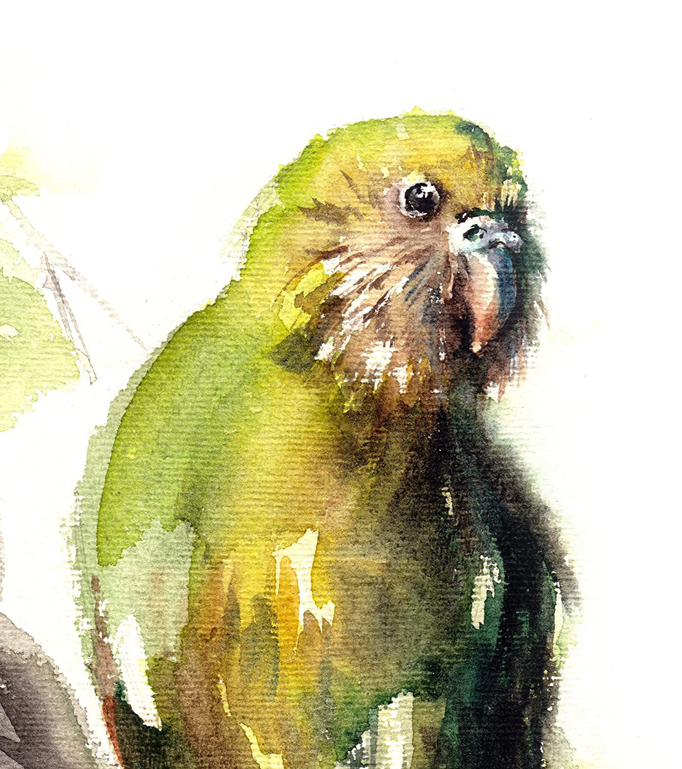 Funky Parrot Wall Art Photos - Wall Art Collections ...