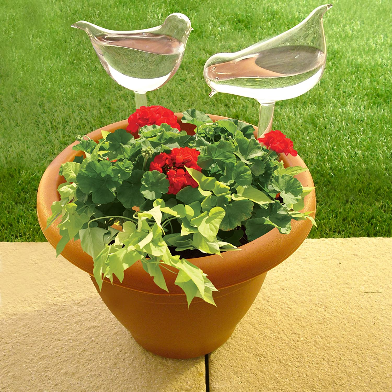 Glass Plant Flowers Water Feeder Self Watering Bird Design Plant Waterings In UK