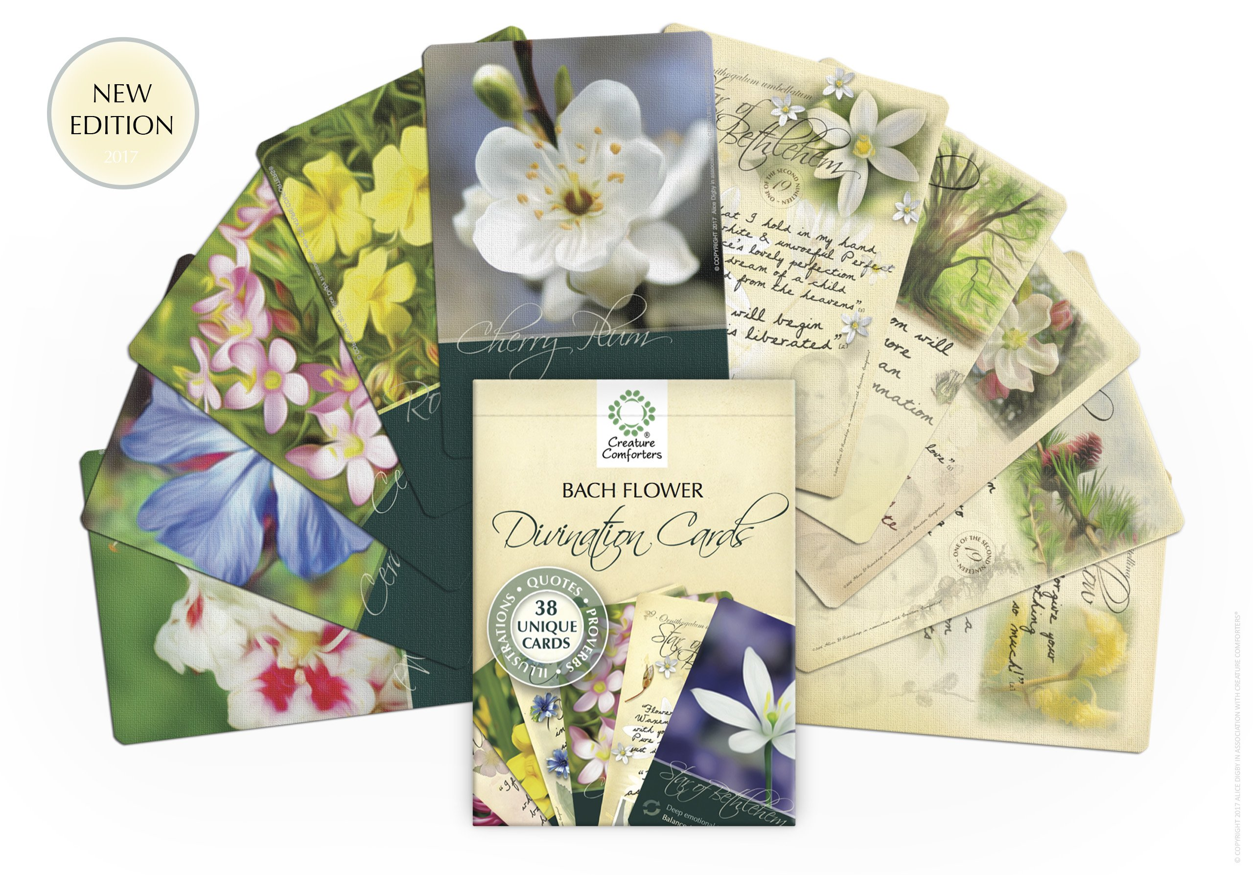Amazon Bach Flower Divination Cards Pack 38 Beautiful