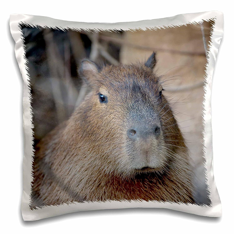 16x16 inch Pillow Case Capybara Mato Grosso Brazil pc/_258361/_1 Rodents The Pantanal 3dRose Danita Delimont