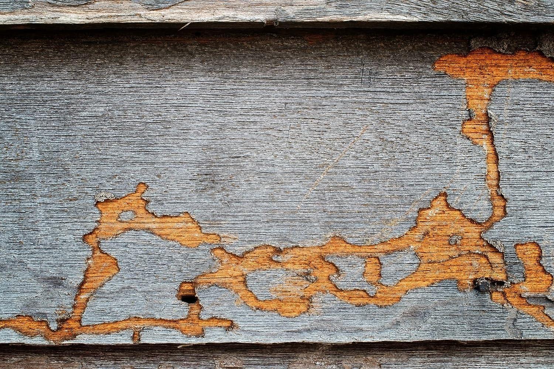 Bekannt 5L Bio Holzschutzmittel Holzwurm, Pilz Biologischer Holzschutzöl DY98