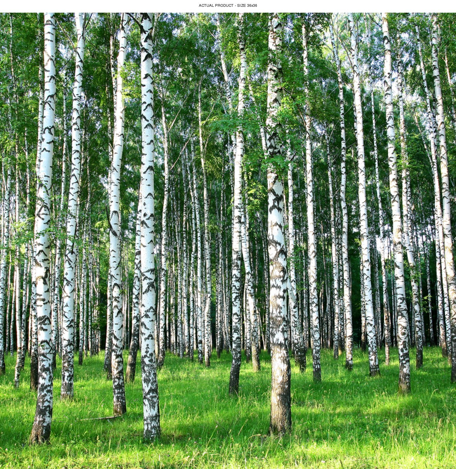 Windowpix 36x36 Inch Decorative Static Cling Window Film Sunlit Forest Trees Printed on Clear for Window Glass Panels. UV Protection, Energy Saving.