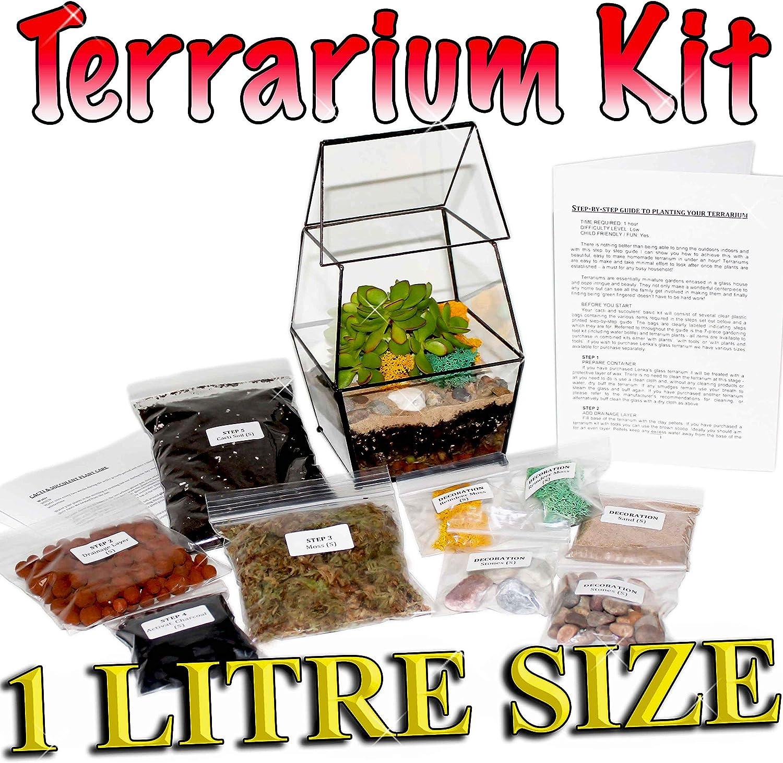 Kit de terrarium à bricoler avec cactus et succulent, Guide pas-à-pas, Emballé au Royaume-Uni S: Amazon.es: Jardín