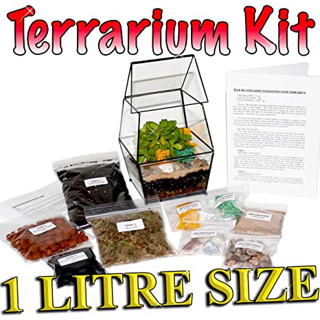 Diy Succulent Cacti Terrarium Kit Step By Step Guide Packed In England Small