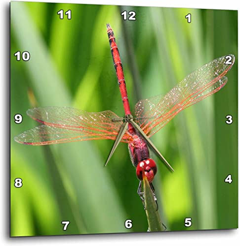 3dRose dpp_21748_2 Insects Dragonfly-Wall Clock