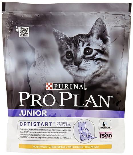 PURINA Pro Plan Comida Seco para Gato Junior con Optistart ...