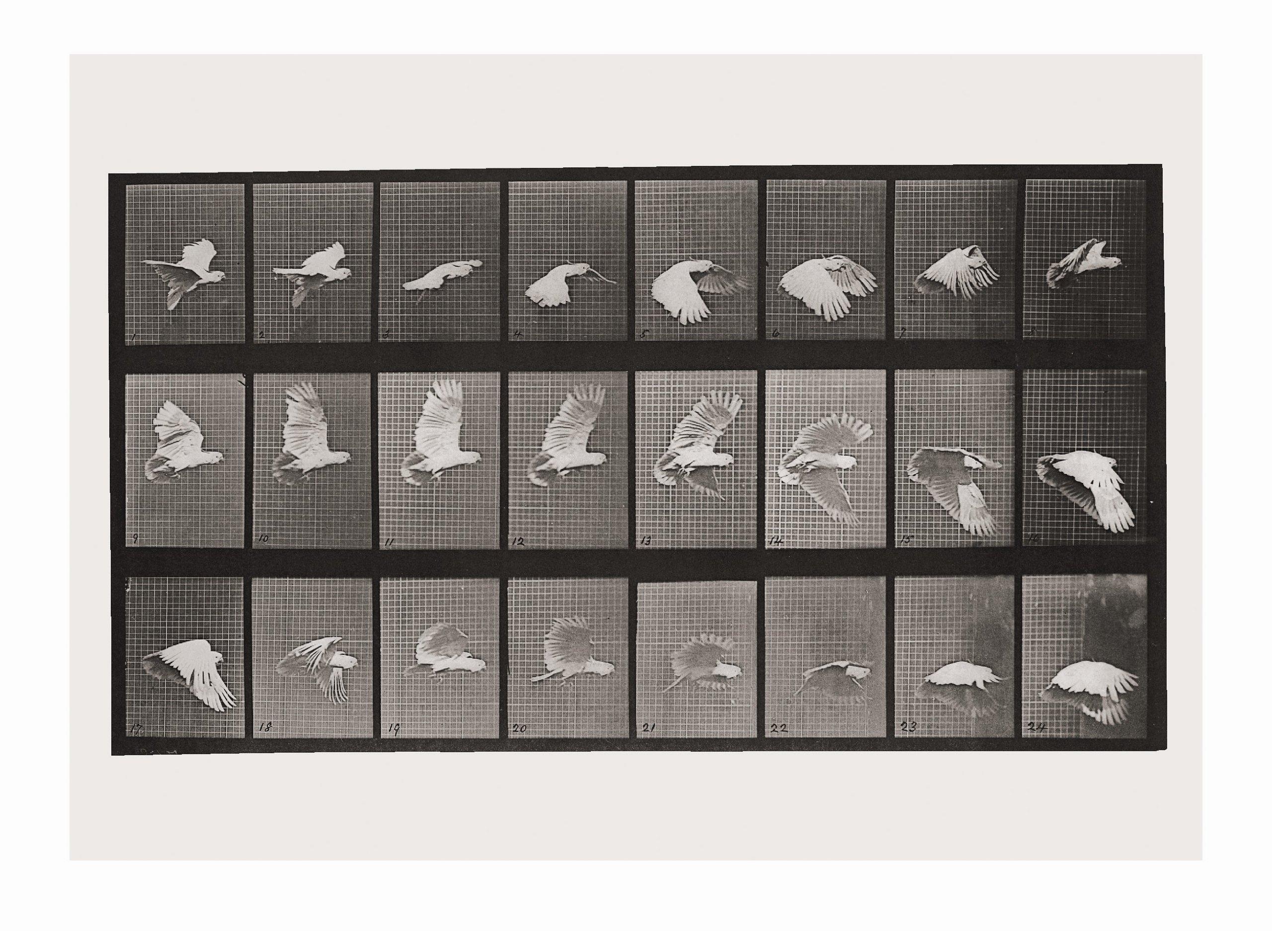 Eadweard Muybridge Animals In Motion Pdf
