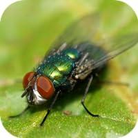 Fly Sounds