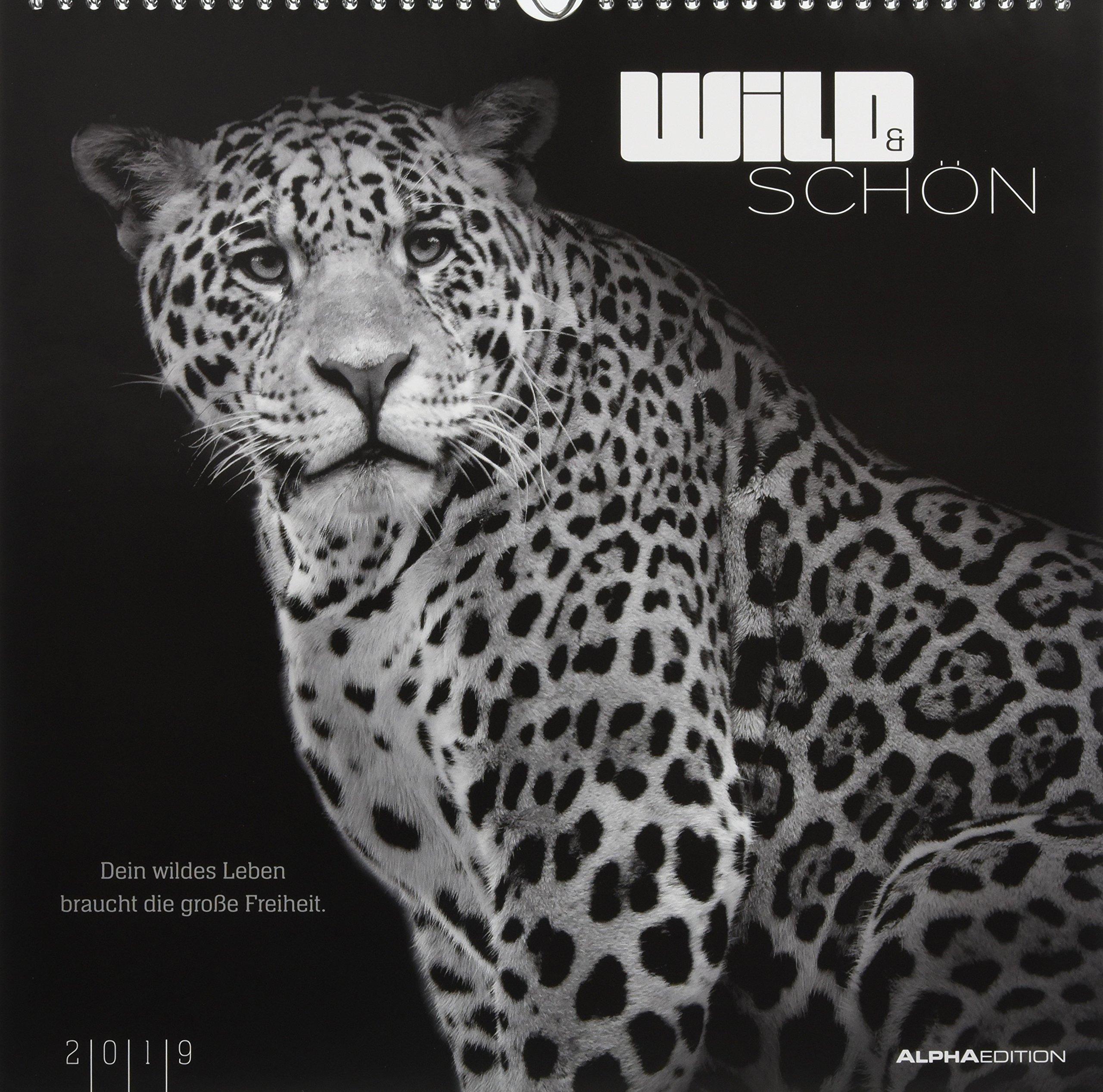Wild & Schön 2019 - Bildkalender (33 x 33) - Tierkalender - mit Zitaten - Wandkalender Kalender – Posterkalender, Wandkalender Rainer Haak ALPHA EDITION 3840793939 Tiere / Jagen / Angeln