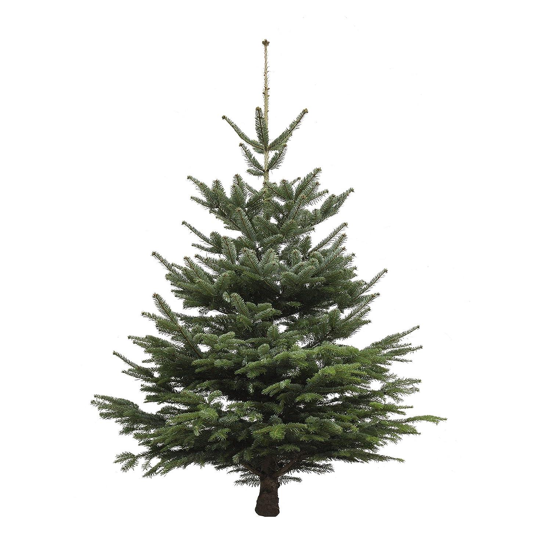 Echter Weihnachtsbaum Nordmanntanne, Höhe ca. 175 - 200 cm, frisch ...