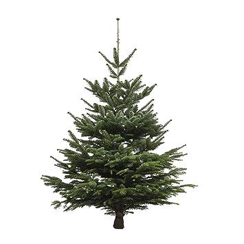 Weihnachtsbaum Herkunft.Echter Weihnachtsbaum Nordmanntanne Höhe Ca 175 200 Cm Frisch Geschlagen