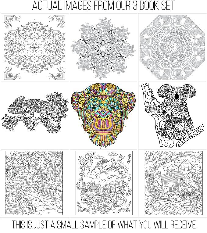 Creatively Calm Studios establecen libros para colorear para adultos ...