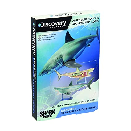 Amazon.com: Paladone Discovery Channel 3D Shark Anatomy Model: Toys ...