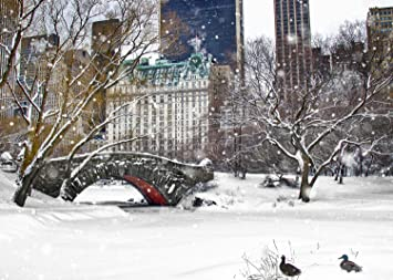 New York Christmas Time.New York Christmas Holiday Cards Ducks By Love Bridge Central Park Snow Boxed 12 Pack Of 5x7 Cards Envelopes Included Greeting Cards Collection