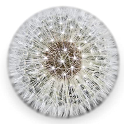 Amazon dandelion paperweight made from a real dandelion full dandelion paperweight made from a real dandelion full sphere mightylinksfo