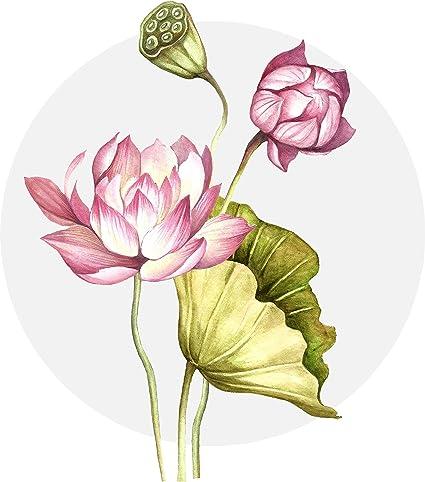 Amazoncom Beautiful Artistic Watercolor Wild Lotus Flowers Cartoon