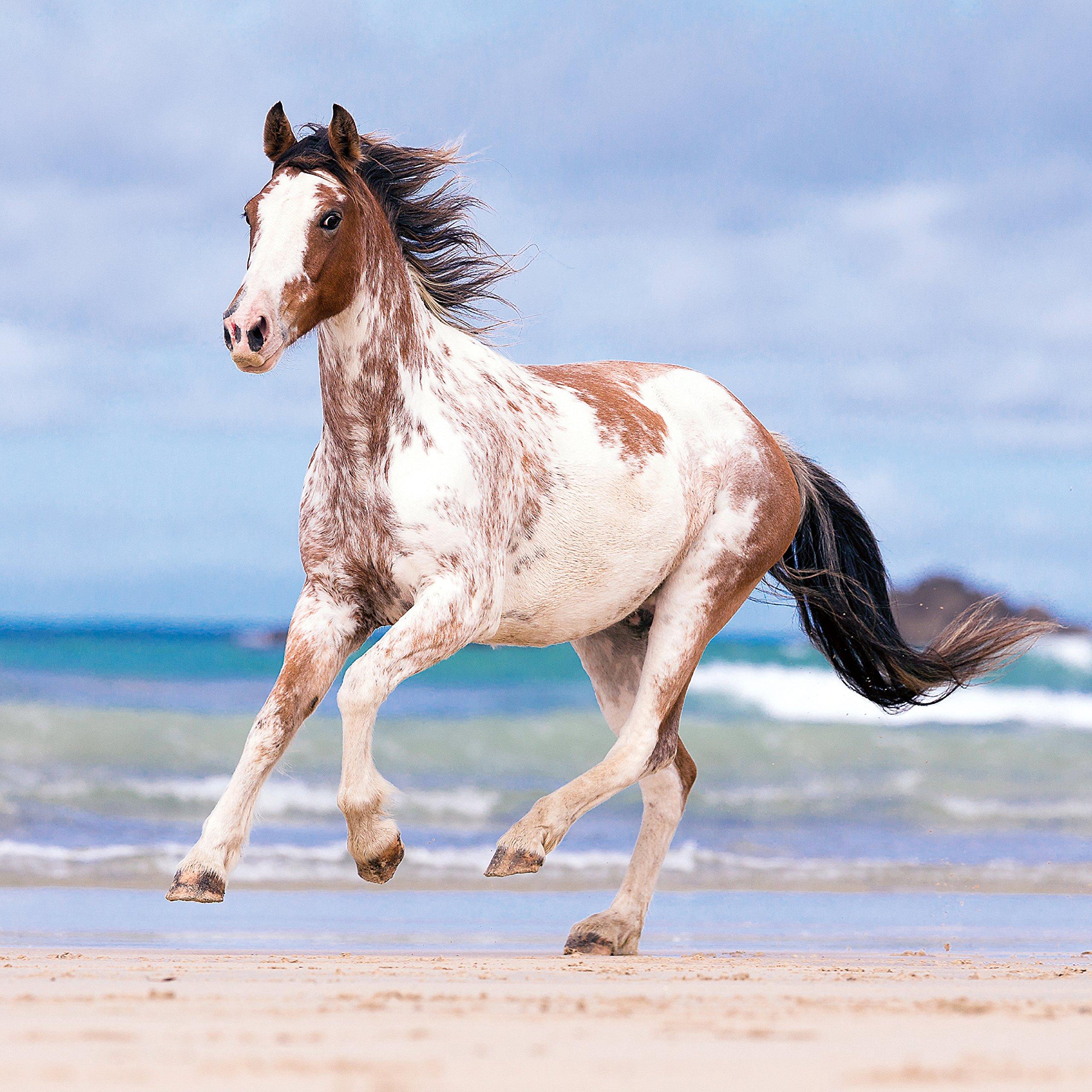 mein pferdekalender 2017 broschurenkalender 30 x 60 geoffnet tierkalender wandplaner