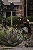 Blue Agave Torch