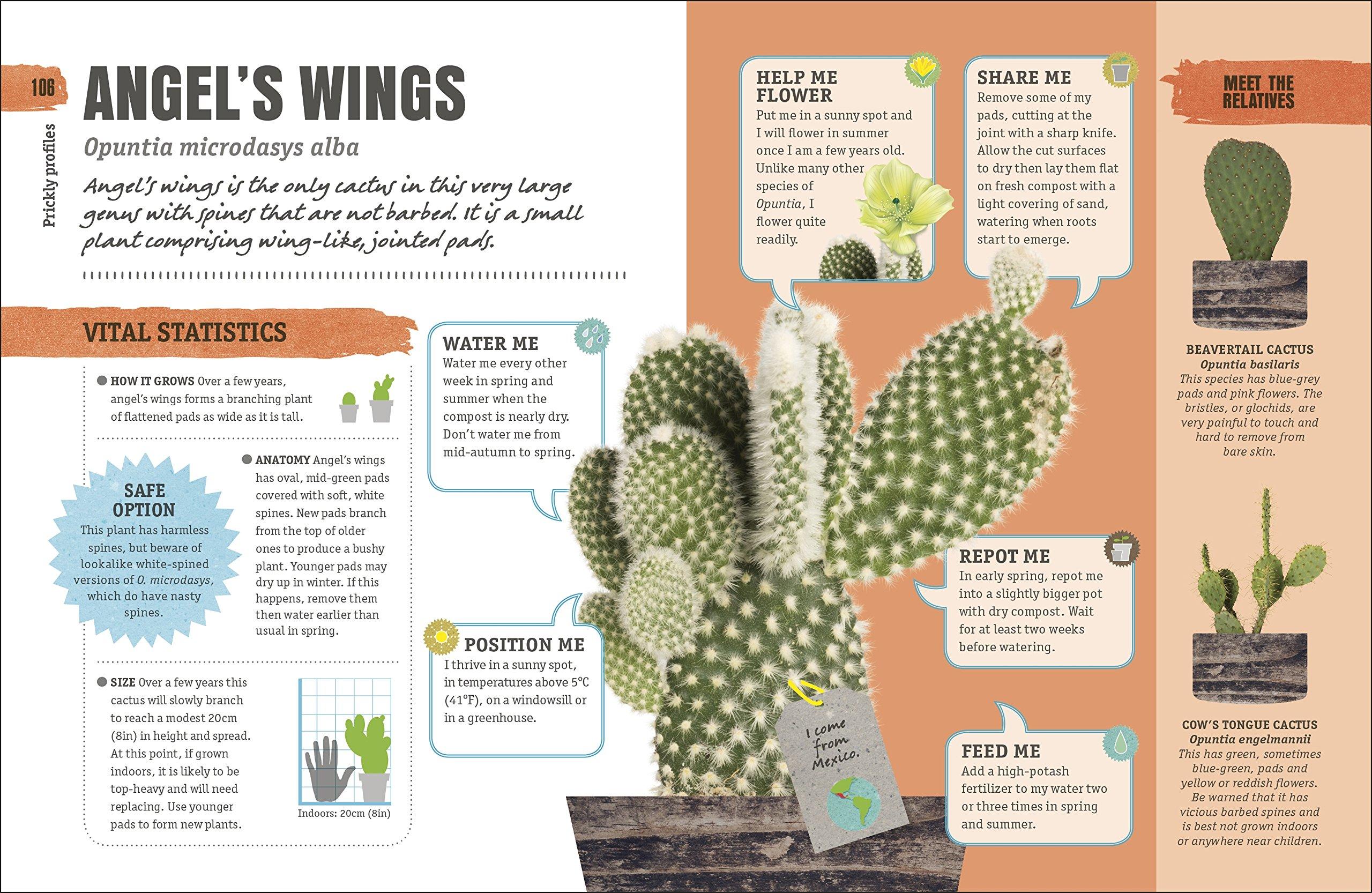 Happy Cactus: Choose It, Love It, Let It Thrive (Dk): Amazon.co.uk ...