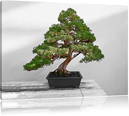 Bonsai Tree On Wooden Table Black White Size 60x40 On Canvas Huge Xxl Pictures Completely Framed
