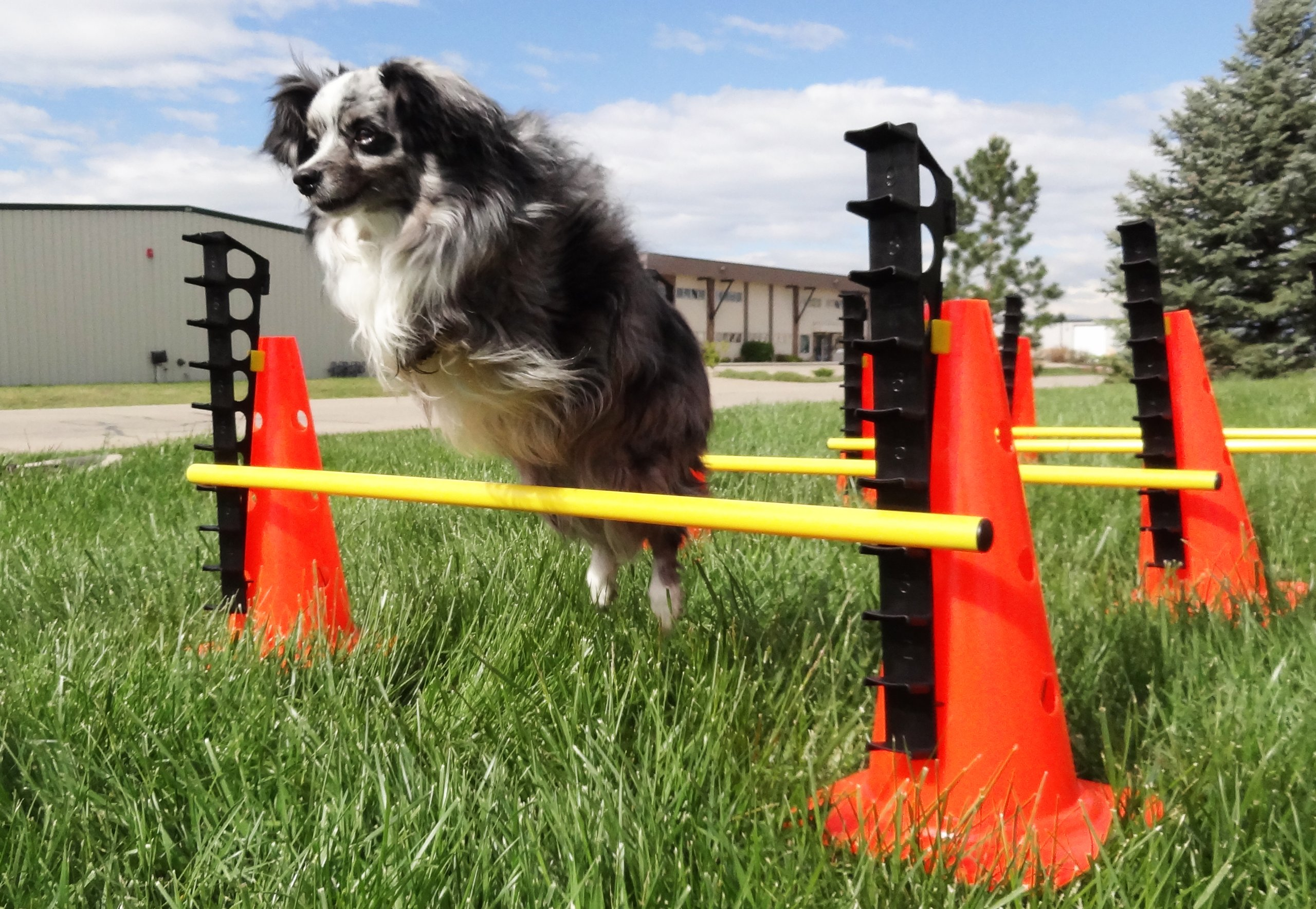 Ball Dynamics FitPAWS CanineGym Agility Kit by Ball Dynamics