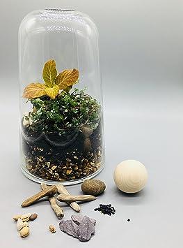 Fait à la main en verre transparent pour terrarium kit ouvert ou ...