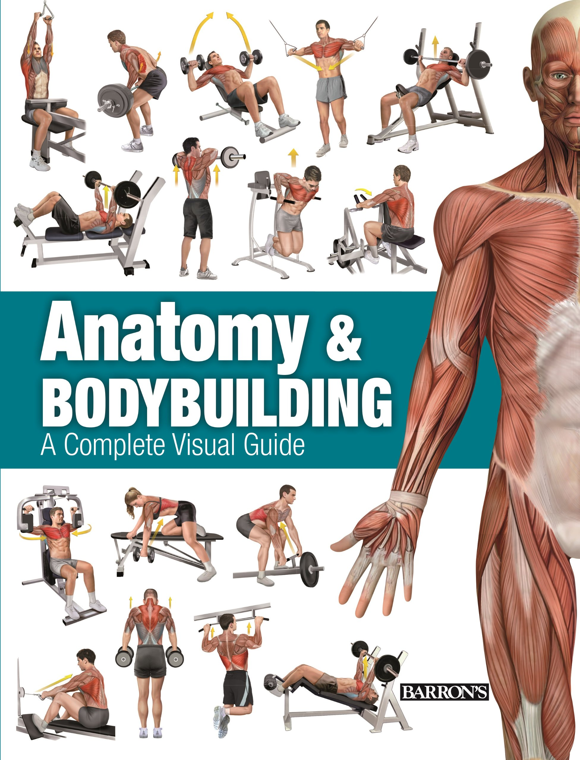 Buy Anatomy & Bodybuilding: A Complete Visual Guide Book Online at ...