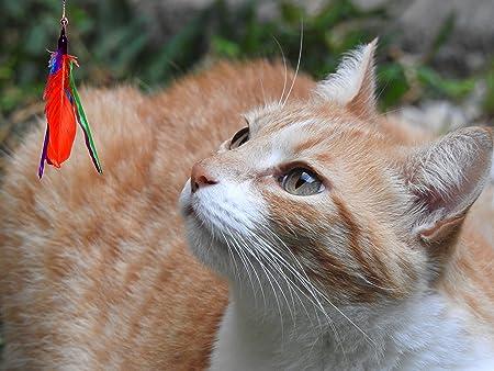Juguete para gato con plumas reales y con campana para gatitos & Juguete para gato Premium extensible 5 en 1, incluye ratón para jugar, campana removible, ...