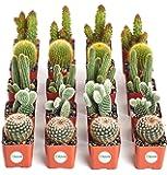 Shop Succulents Cactus (Collection of 20)