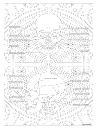 Bones Of The Body Diagram Amazing Human Skeleton Diagram With Labels