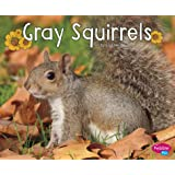 Gray Squirrels (Woodland Wildlife)